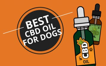 Best CBD oil for dogs thumbnail