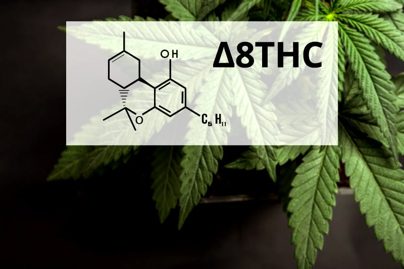 Delta 8 THC: Creating a New Buzz for Cannabis
