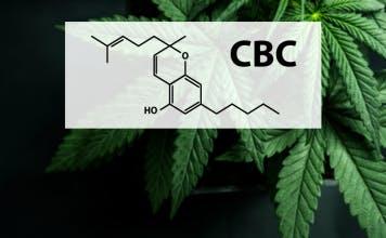 cbc cannabinoid