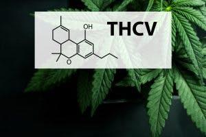thc-v cannabinoid