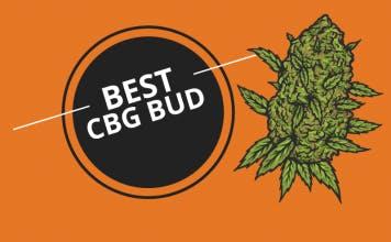 Best CBG Bud Thumbnail